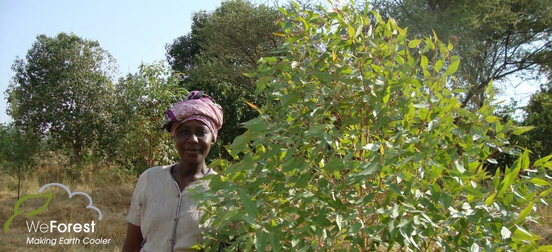 WeForest Tree Growing Project in Tanzania